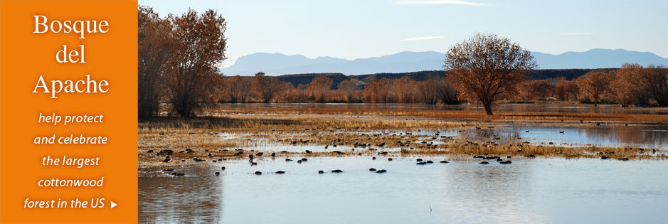 Bosque del Apache: help protect and celebrate the largest cottonwood forest in the US